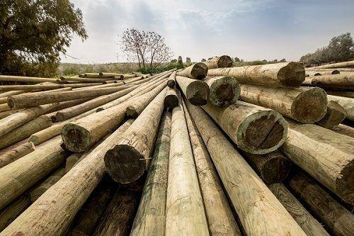 עמוד-חשמל-מעץ-2-5
