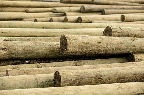 עמודי עץ